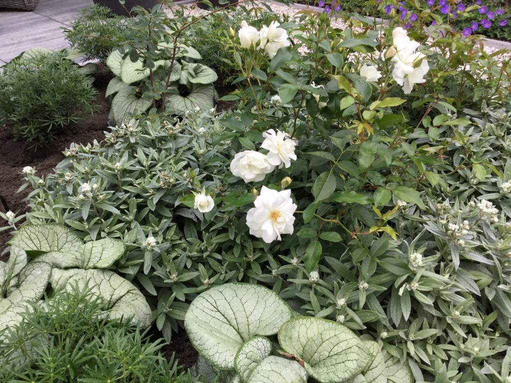 Nieuwe bewoners.. een nieuwe inrichting in deze tuin in Lochem